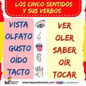 Los cinco sentidos y sus VERBOS en español